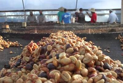 Demeter Rohkaffee Brasilien