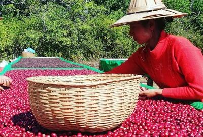 Rohkaffee aus Burma