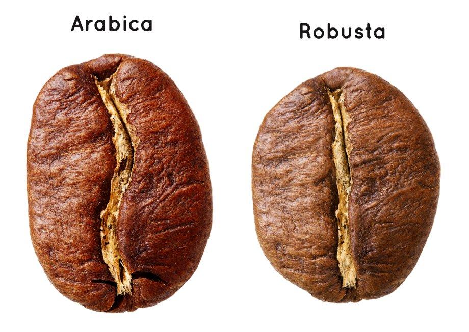 Arabica und Robusta