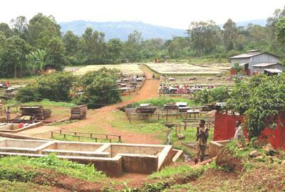 Sidamo Rohe Kaffeebohnen Äthiopien