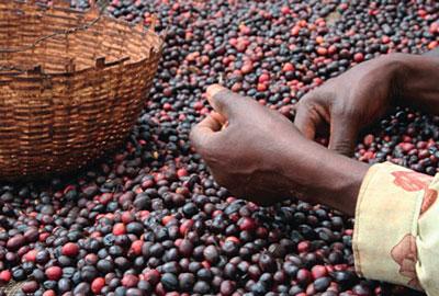 Sidamo grüne Kaffeebohnen Äthiopien