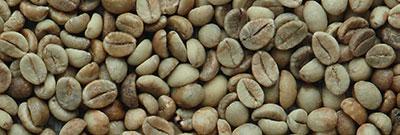 Rohkaffee Robusta Indien