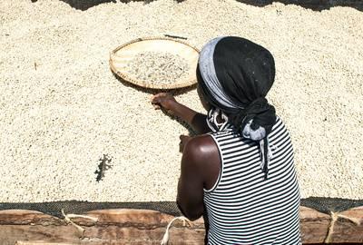 Natural Robusta Tanzania