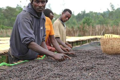 Rohkaffeebohnen Äthiopien Sidamo